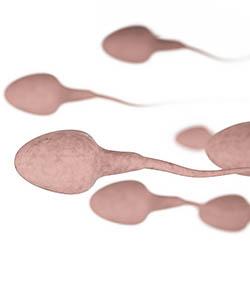 sperm-mvl
